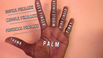 Do You Know: What Fingers Names' are Called?